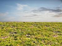 Wild grass 4