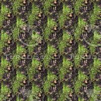 Mossy tree bark 27