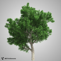 3d model broadleaf tree leaves
