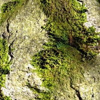 Mossy rock 21