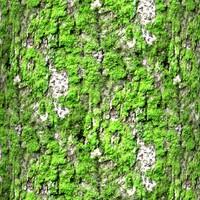 Mossy tree bark 29