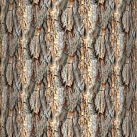 Tree bark 49