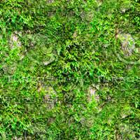 Mossy tree bark 28