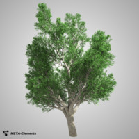 broadleaf tree 3d obj
