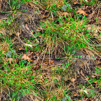 Muddy ground with weeds 2