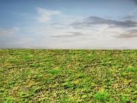 Weeds ground 3