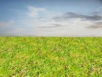Wild grass 8