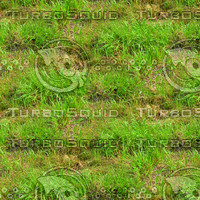 Long grass 2
