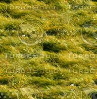 Long grass 1