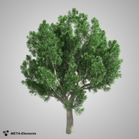 3ds max broadleaf tree