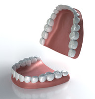 3d model sets human teeth