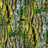 Mossy tree bark 30