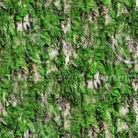 Mossy tree bark 31
