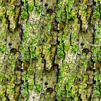 Mossy tree bark 33