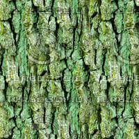 Mossy tree bark 32