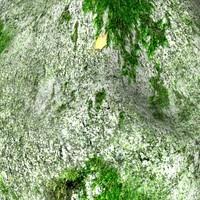 Mossy rock 26