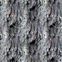 Tree bark 54