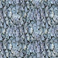 Tree bark 56