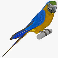 maya blue gold macaw pose