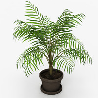 plant tree palm 3d max