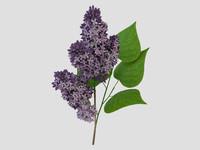 Lilac_violet