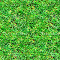Rough grass 3