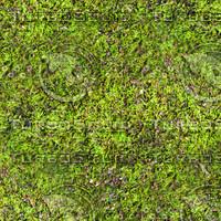 Mossy ground 18
