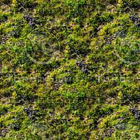 Mossy ground 19
