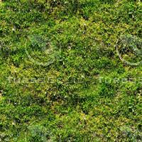 Mossy ground 20