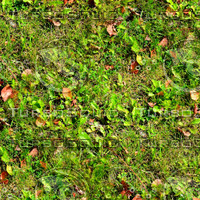 Grass with autumn leaves 16