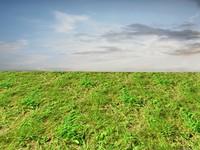 Wild grass 10