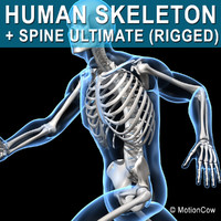 human skeletal rigged skeleton c4d