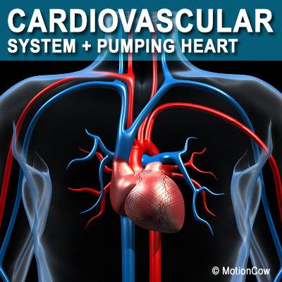 Cardiovascular_A.jpg
