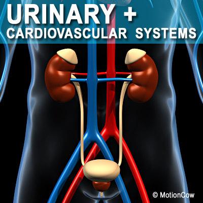 Urinary_A.jpg