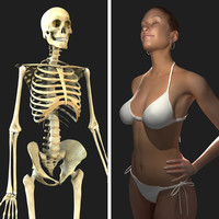 3d rigged skeleton female combo model