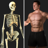 rigged skeleton male combo 3d model