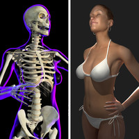 rigged x-ray skeleton female 3d ma