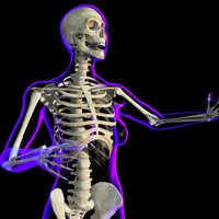 xRay Skeleton (Rigged Female)