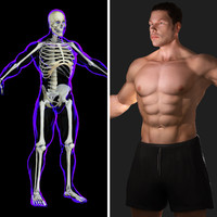 3d ma rigged x-ray skeleton male body