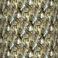 Tree bark 61