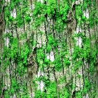 Mossy tree bark 36