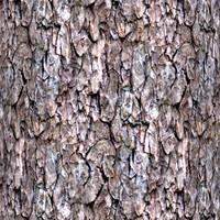 Tree bark 57