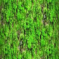 Mossy tree bark 37