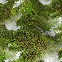 Mossy rock 33