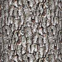 Tree bark 59