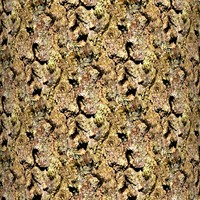 Tree bark 60