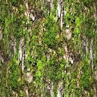 Mossy tree bark 35