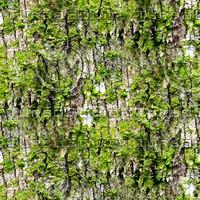 Mossy tree bark 34