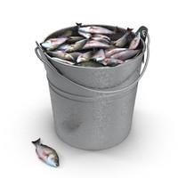 max fish bucket