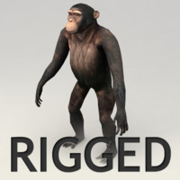 3d model chimpanzee rigged biped